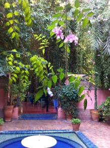 Magic! Botanic GardenJardin Majorelle